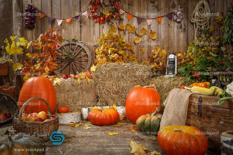 بک گراند دکور پاییز عکاسی