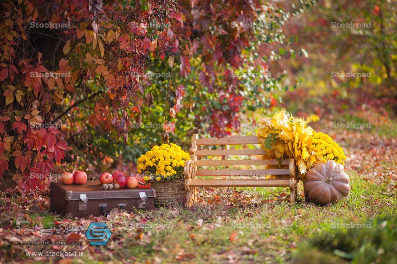 دانلود بک گراند برای طراحی عکس پاییز
