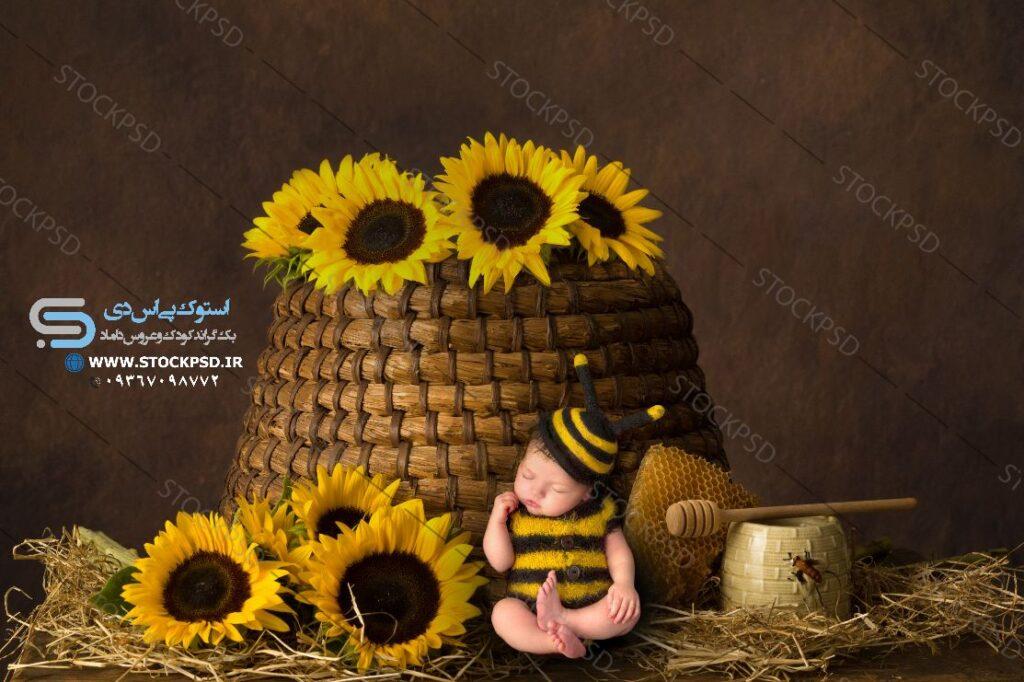 بک گراند دکور زنبور عکاسی